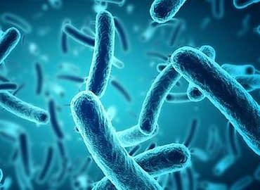 Купить Бактерии,Интернет-магазин Freyia.ru (фрейя)