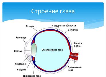 Купить Глаза,Интернет-магазин Freyia.ru (фрейя)