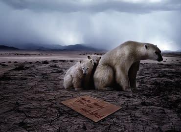 Купить Чем грозит потепление климата,Интернет-магазин Freyia.ru (фрейя)
