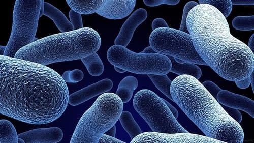 Купить Что такое бактерия ?,Интернет-магазин Freyia.ru (фрейя)